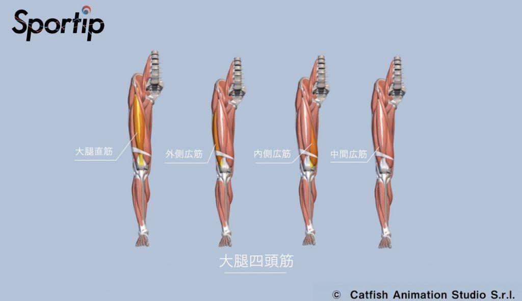 鍛えられる部位 大腿四頭筋