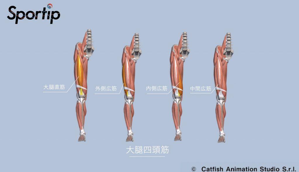 鍛えられる部位 (ハムストリングス・大腿四頭筋・大臀筋・脊柱起立筋)