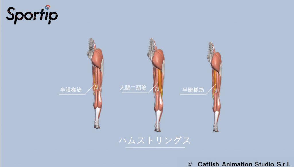 鍛えられる部位 (臀筋・大腿四頭筋・ハムストリングスス・三角筋)