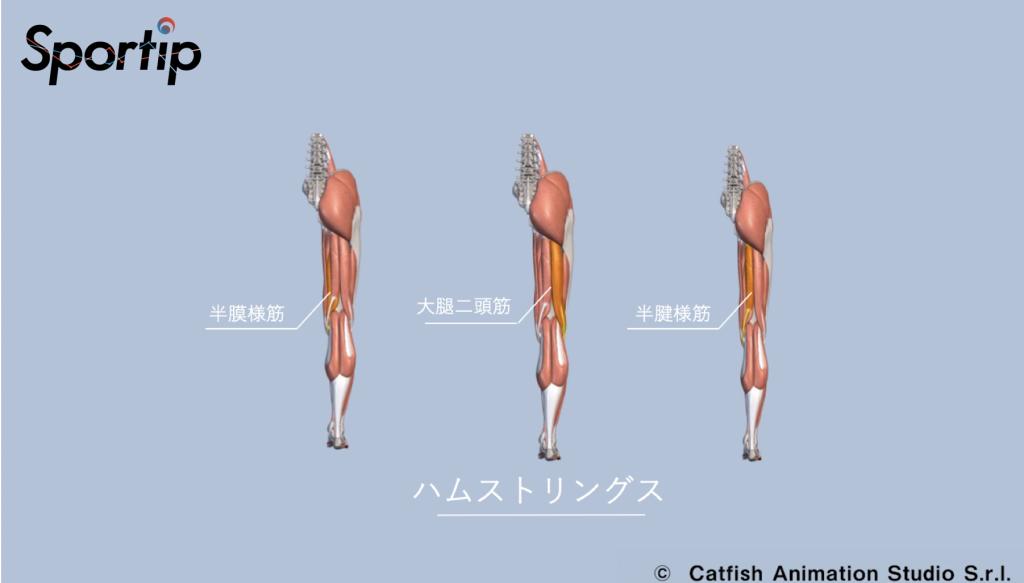 鍛えられる部位 (ハムストリングス・大臀筋・脊柱起立筋)