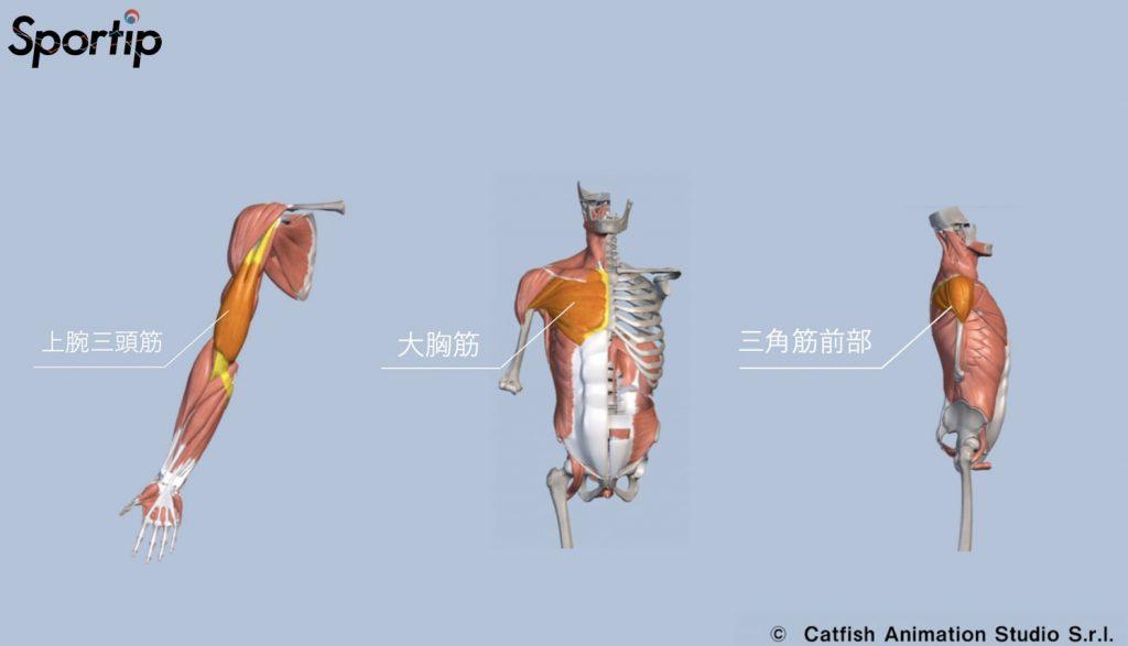 鍛えられる部位 (三角筋・大胸筋・上腕三頭筋)